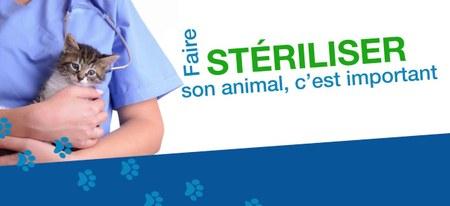 Stérilisation des chats domestiques